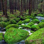 جنگل سیاه