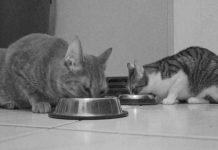 غذای سگ و گربه
