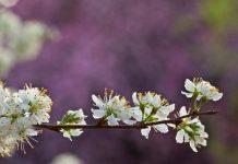 سلامت در بهار
