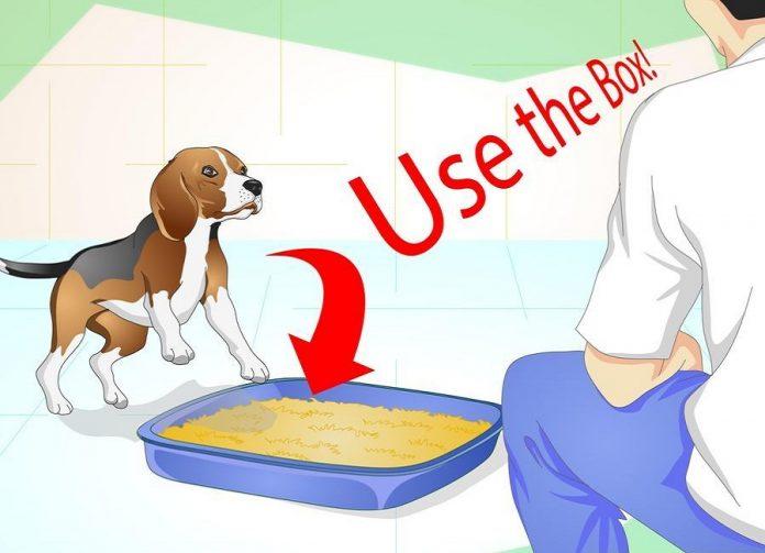 سگ را داخل ظرف بگذارید