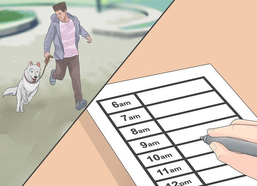 برنامه تمرینی برای تربیت سگ