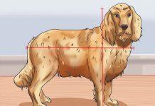 تشخیص سن سگ نسبت به سایز