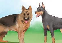 تفاوت سگ نگهبان و سگ بگیر