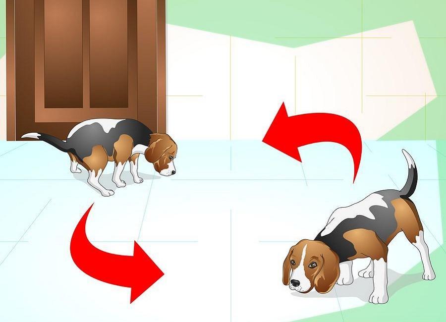 توجه به علائم سگ بالغ برای رفتن به دستشویی