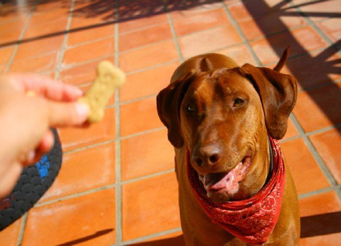 جایزه را مقابل صورت سگ بگیرید