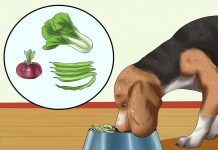 در دادن غذا به سگ زیاده روی نکنید
