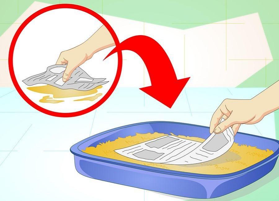 روزنامه را آغشته به ادرار سگ کرده داخل ظرف قرار دهید