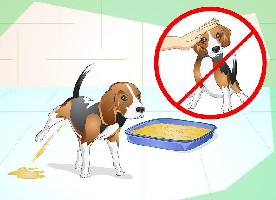 سگ را تنبیه نکنید