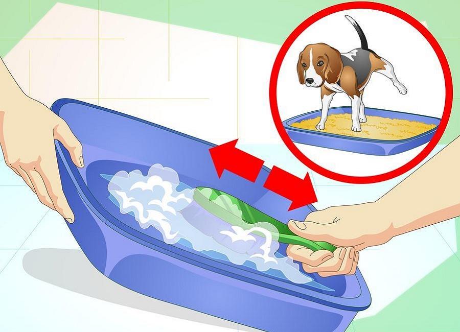 شستن توالت مخصوص سگ