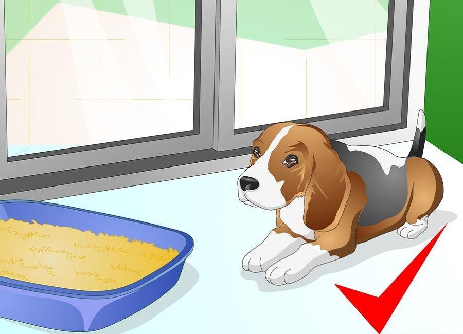 محدود کردن سگ در اتاق در بسته