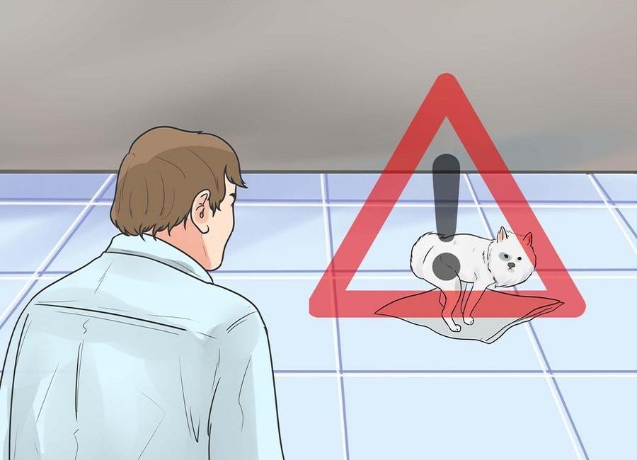 مراقب سگ زمانی که بیرون از قفس است باشید