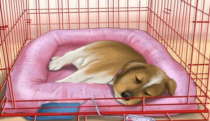 وسایل موردنیاز برای خواب راحت سگ