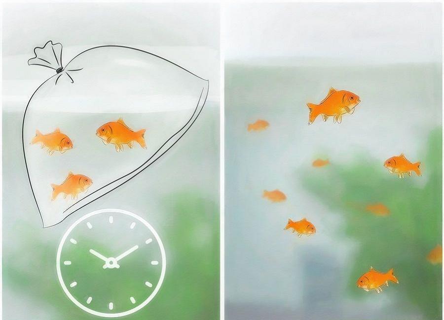 نگه داری اصولی از ماهی قرمز