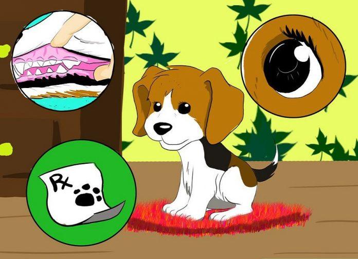 بررسی سلامت سگ