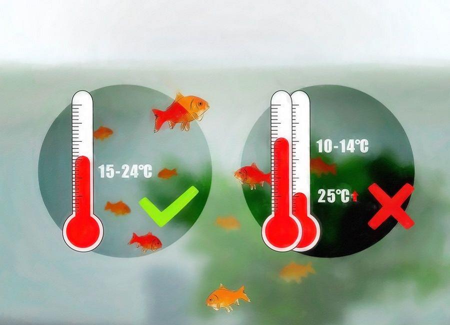 دمای مناسب برای ماهی های قرمز