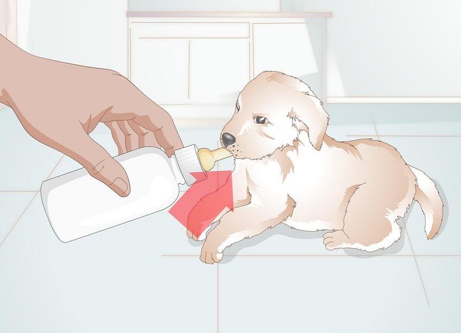 حالت مناسب برای شیر دان به توله