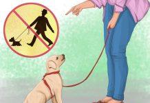 دادن آموزش های لازم به سگ