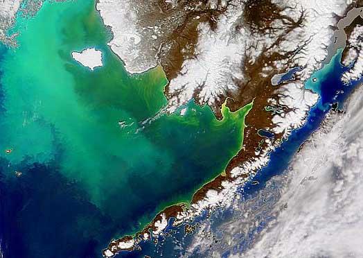 چه مکان هایی از زمین از فضا قابل مشاهده است: شکوفه فیتوپلانگتونها