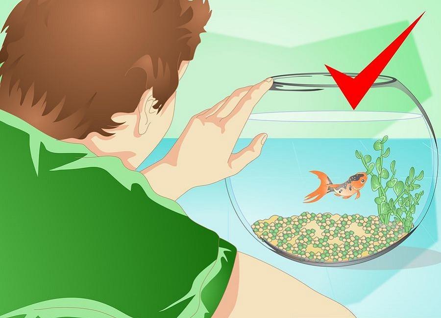 برگرداندن ماهی به تنگ اصلی