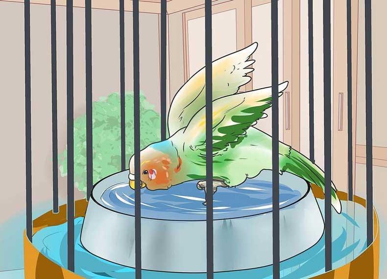 حمام کردن