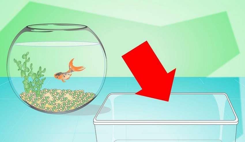 عوض کردن آب تنگ ماهی