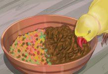 غذای مناسب طوطی