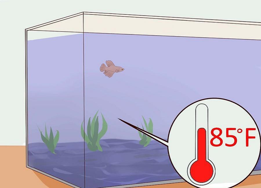 دمای آب را تا 30 درجه بالا ببرید