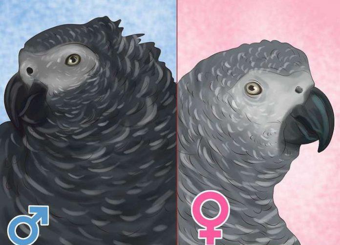 تشخیص جنسیت کاسکو