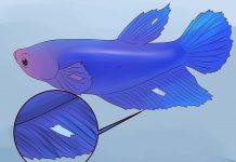 دقت به بال ماهی
