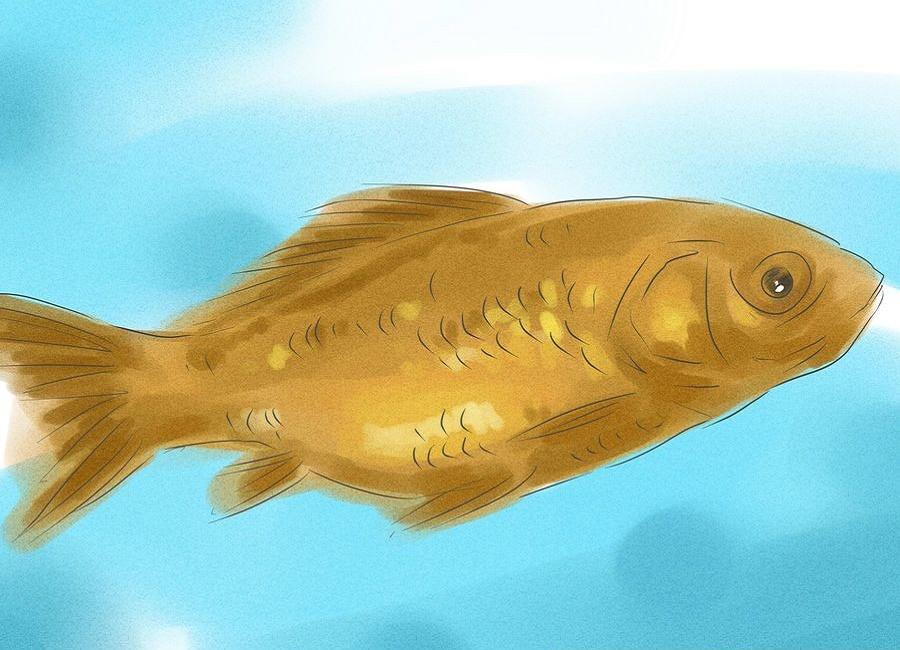 ماهی نر