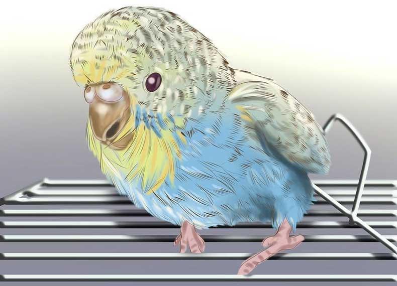 توجه به سن پرنده