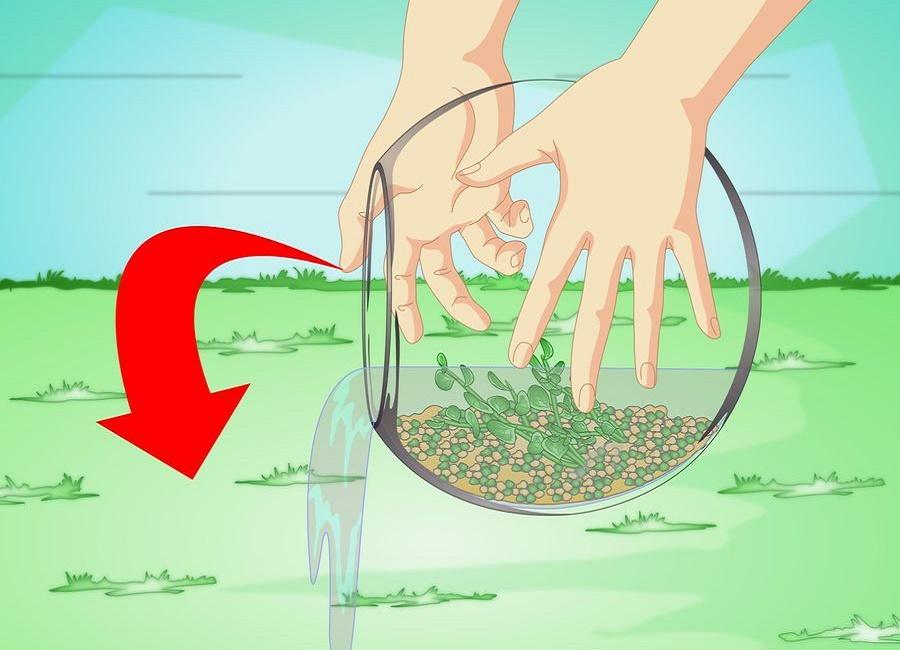 استفاده از آب تنگ جهت آبیاری گیاهان