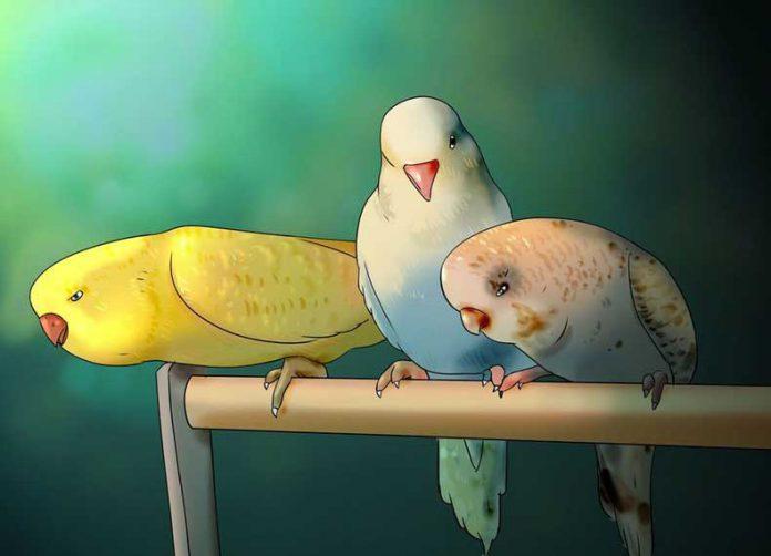 انتخاب مرغ عشق