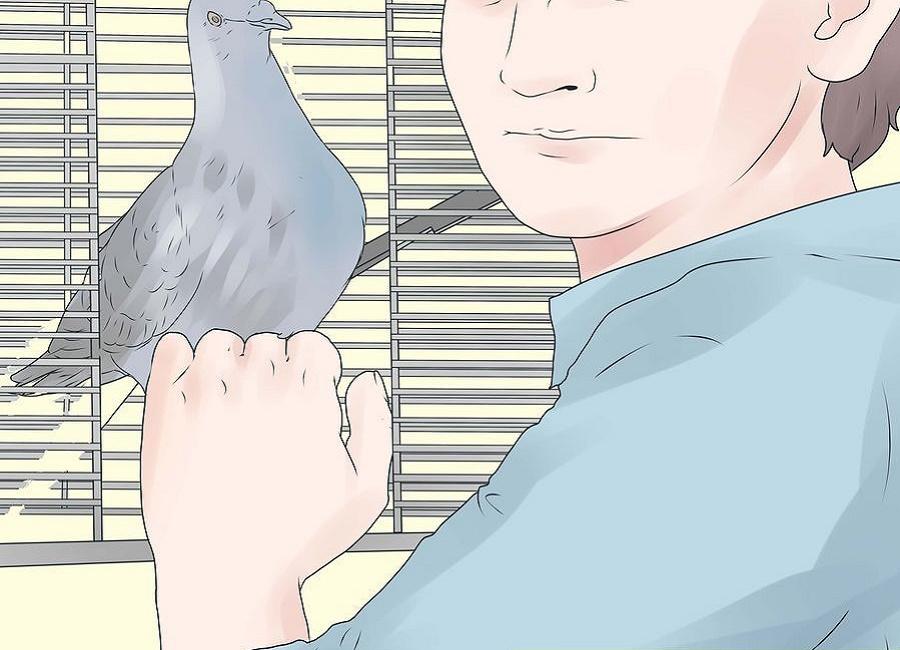 باز کردن قفس پرنده