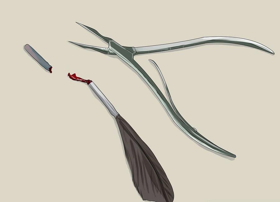 از بریدن پر های دارای خون اجتناب کنید