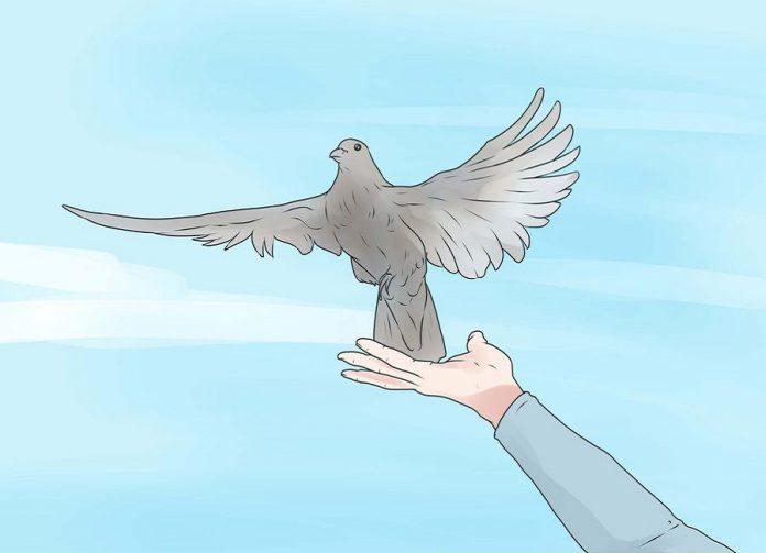 پرواز دادن پرنده