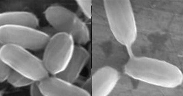 دلایل اثبات اینکه انسان ها از یک فضای دیگر آمده اند: باکتری ها سال ها در فضا زنده می کنند