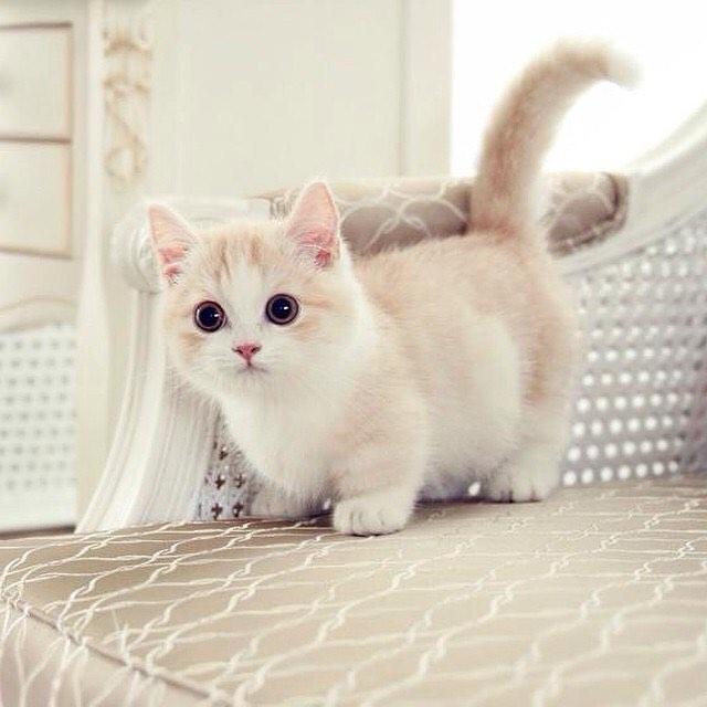40 عکس گربه ملوس و دوست داشتنی که هرکس را به داشتن یکی از آنها ...