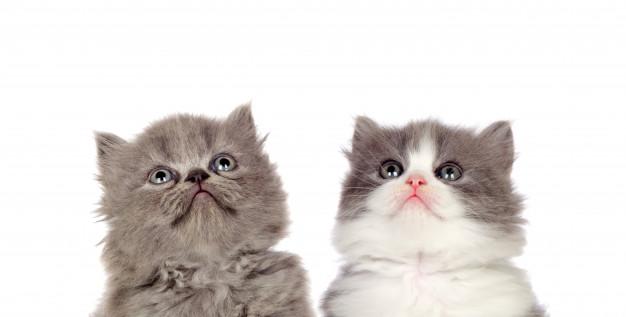 گالری زیبا از عکس گربه ملوس کوچولو و شیطون