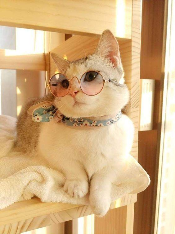 گالری جدیدترین عکس گربه ملوس بامزه برای پروفایل - مینویسم