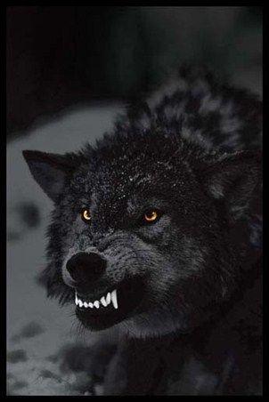 نقاشی سیاه قلم گرگ وحشی