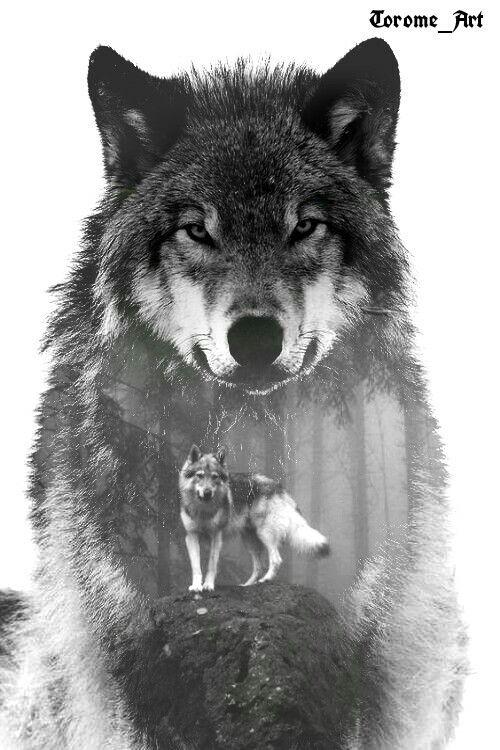 زیباترین گالری نقاشی گرگ با سیاه قلم