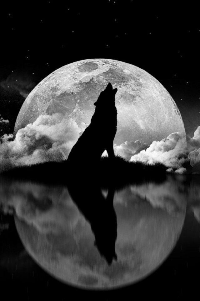 عکس نقاشی گرگ با ماه با مداد