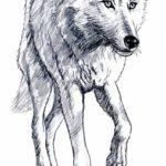 عکس طراحی گرگ سفید