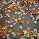 پس زمینه زیبا پاییزی برای کامپیوتر