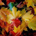 عکس برگ های پاییزی برای بک گراند کامپیوتر