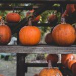 عکس کدو میوه پاییزی برای بک گراند لپ تاپ
