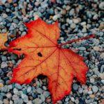 تصاویر با کیفیت بالا از فصل پاییز برای صفحه لپ تاب