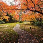 تصویر زمینه فصل پاییز با کیفیت بالا برای لپ تاپ