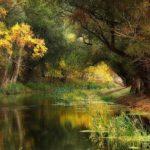 تصویر زمینه با کیفیت از فصل پاییز برای صفحه کامپیوتر